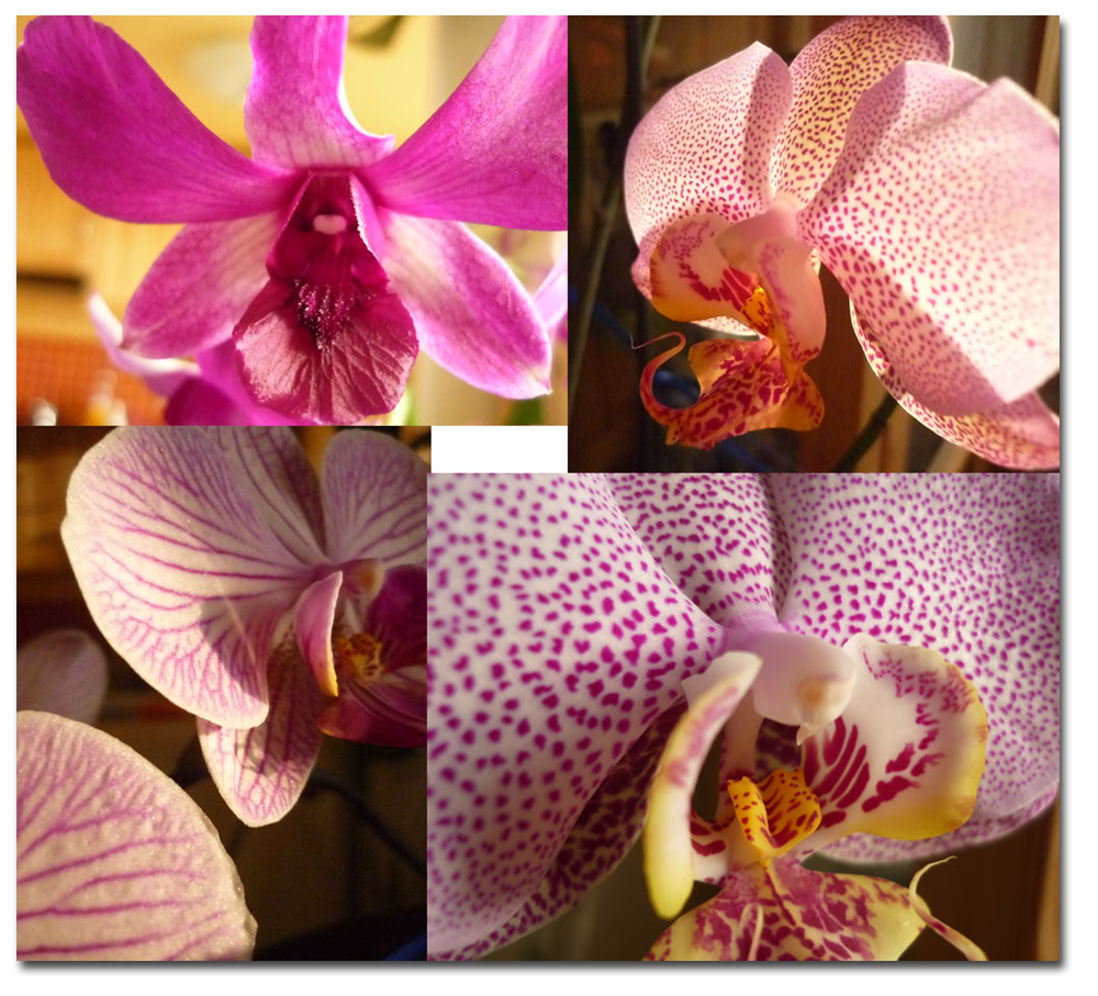 http://mirzule.free.fr/images/orchids2011.png